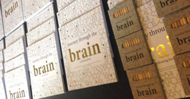 Journey Through the Brain